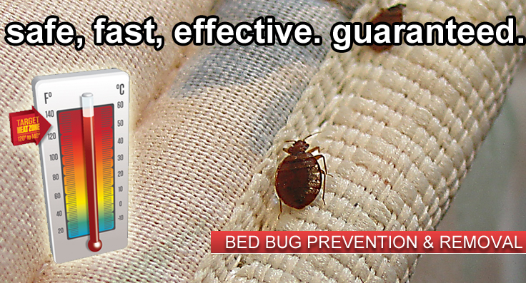 bed-bug-removal star