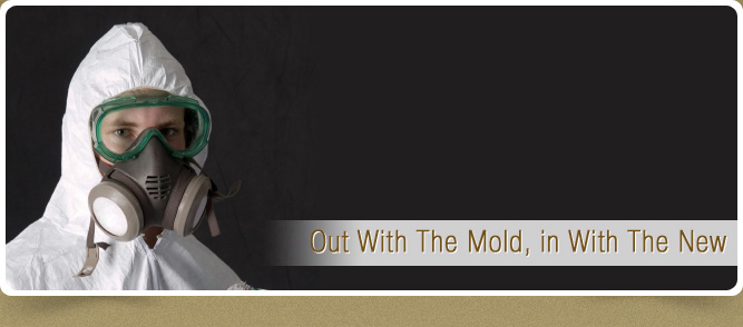mold removal star